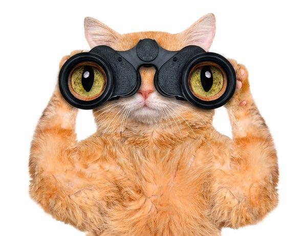 funny-cat-pic-rheumjc